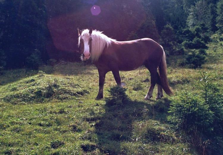 Welsh Pony Landschaft